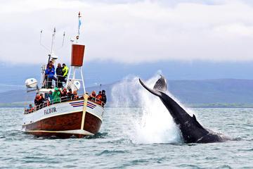 Croisière traditionnelle d'observation des baleines au départ de...