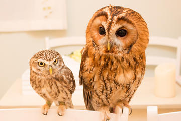 Owl Cafe Experience in…