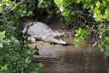 Safari per avvistamento coccodrilli nelle isole Whitsunday con pranzo