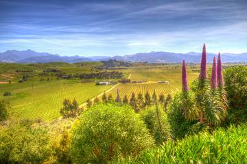 Full-Day Wine Gourmet and Scenic Delight Tour from Blenheim