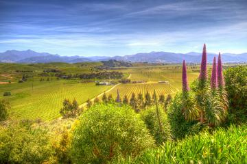 Full-Day Wine Gourmet and Scenic...
