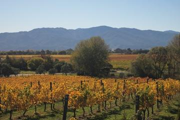 Half-Day Wine Gourmet and Scenic Delights Tour from Blenheim