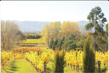Private Tour: Marlborough Winter Wine and Scenic Tour from Blenheim