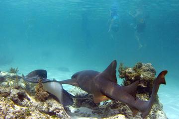 Schnorcheltour mit Haien und Stachelrochen in Punta Cana