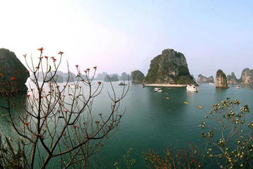 Halong Bay Day Cruise Including Seafoo…