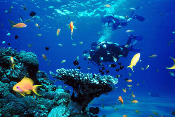 Full-Day Koh Phi Phi Scuba Diving Course from Phuket