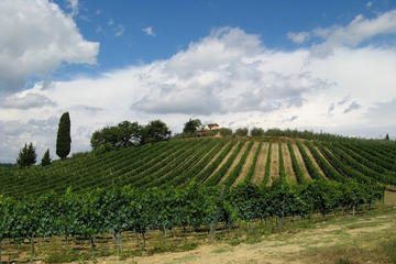 Siena and Chianti Wineries Excursion by Private Luxury Van from Florence