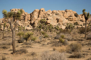 Joshua Tree National Park SUV or Van Tour