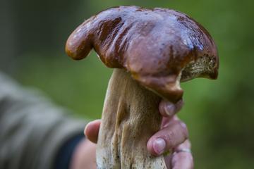 2-Day Farm Experience with Mushroom ...