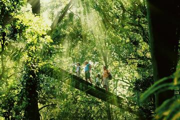 Gold Coast Lamington National Park and Tamborine Mountain 4WD  Eco...