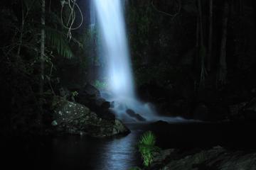 Tour nocturne des vers luisants et de la forêt tropicale du parc...