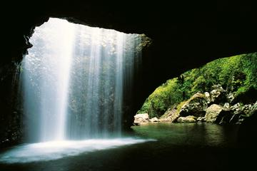 World Heritage Springbrook National Park Tour Including Natural Bridge