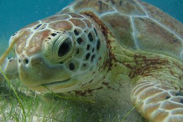 Aquatic Dream   -Sea Turtles-