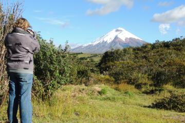 Cotopaxi National Park Private Tour