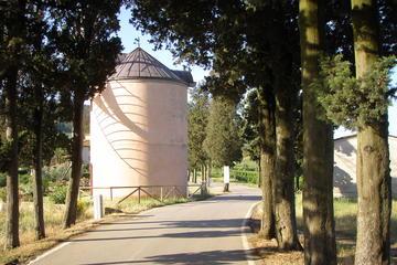 Visita al mulino a vento e degustazione di olio d'oliva