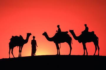 Excursion à dos de chameau au coucher du soleil dans la palmeraie de...