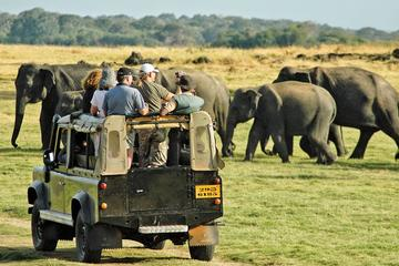 Private Jeep Safari Tour: Elephant Gathering Safari in Minneriya Park