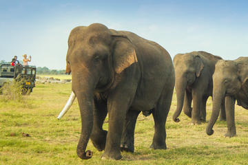 Minneriya National Park: Elephant...