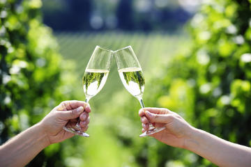 Penedes Wine and Cava Day Tour from...