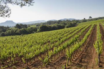 Excursión privada de cata de vino provenzal con picnic desde Cannes