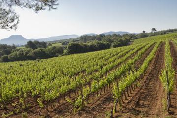 Tour privé provençal de dégustation de vin avec déjeuner pique-nique...
