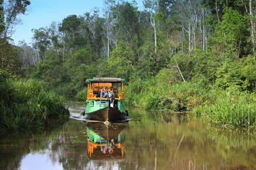 4-Day Private Orangutan and Bornean Primates Tour from Pangkalanbuun