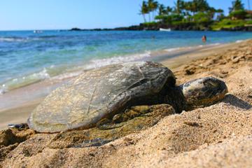 Recorrido circular de aventura por Big Island