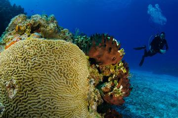 2-Tank Certified Dive Excursion in Cozumel