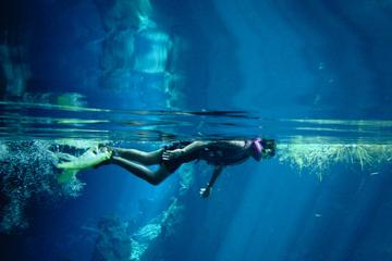 Cozumel Snorkeling Tour from Playa del Carmen