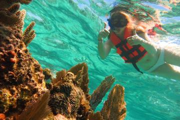 Aventura de buceo de superficie de día completo desde Cancún y la...