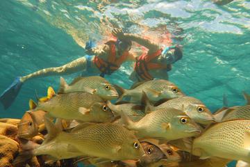 Aventura de medio día de buceo de superficie en Puerto Morelos