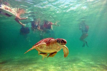 Swimming with Turtles and Cenotes Tour