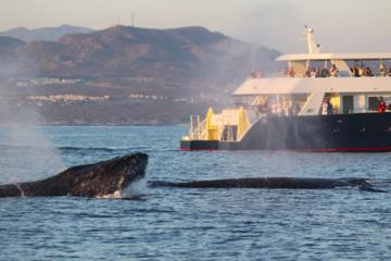 Whale-Watching Discovery Cruise
