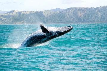 Whales Watching & Cayo Levantado Adventure