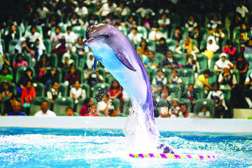 2-Day Afternoon Desert Safari, Dubai Dolphinarium and Half-Day City...
