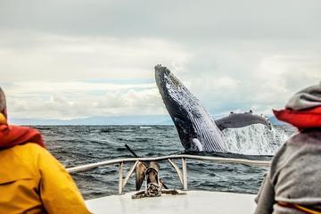 Excursion baleines de 3jours à Québec et Tadoussac