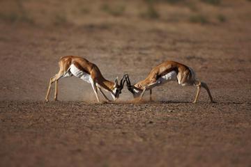 ケープタウン アキラ野生動物保護サファリ