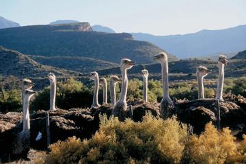 4-tägige Garden Route Tour von Kapstadt aus