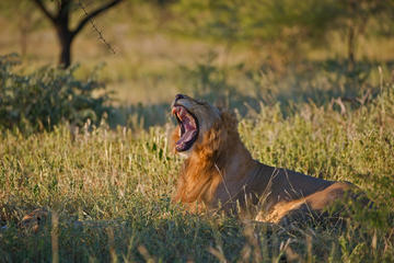 4-tägige Tour Kruger Park ab Johannesburg