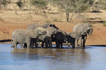 Addo Elephant National Park - Tagesausflug von Port Elizabeth