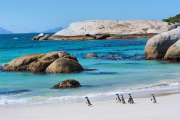 Avontuur met de Big Five van de zee vanuit Kaapstad