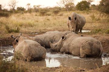 Excursion Big Five d'une journée complète dans le parc national Kruger