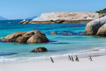 Marine Big 5– Abenteuer von Kapstadt aus