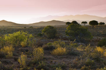 Oudtshoorn and Little Karoo Day Trip from Knysna
