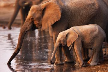 Pilanesberg Naturschutzgebiet Safari...