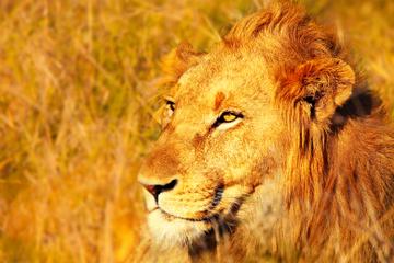 Safári de 4 dias pelo Parque Nacional de Kruger de Joanesburgo...