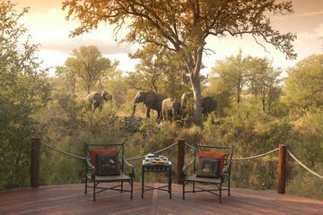 Safári de luxo de 3 dias no Parque Nacional de Kruger saindo de...