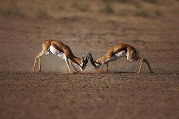 Safari dans la réserve de gibier d'Aquila au départ du Cap