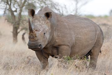Safari de 4jours dans le parc national Kruger depuis Johannesburg...