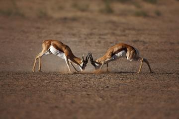 Safari de fauna y flora en Aquila Game Reserve, en Ciudad del Cabo